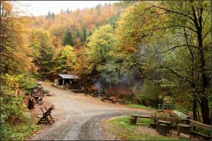 Lesní bar na podzim