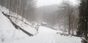 Lesní bar a zima