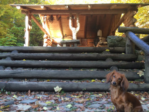 Naše Bessy na podzim