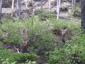 Zajíci v lese
