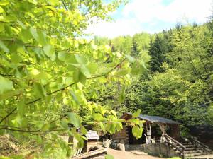 Letní Lesní bar
