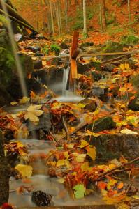 Krásné podzimní listí